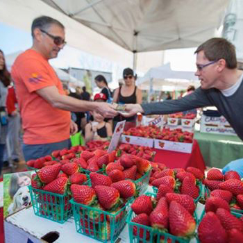 strawberries for sale at farmers market