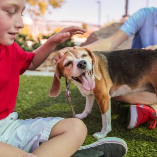 kids petting beagle