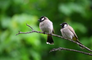 Two birds sit on a tree branch.