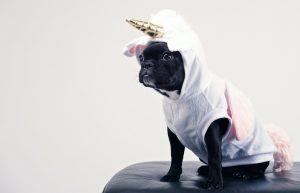A dog in a unicorn costume.
