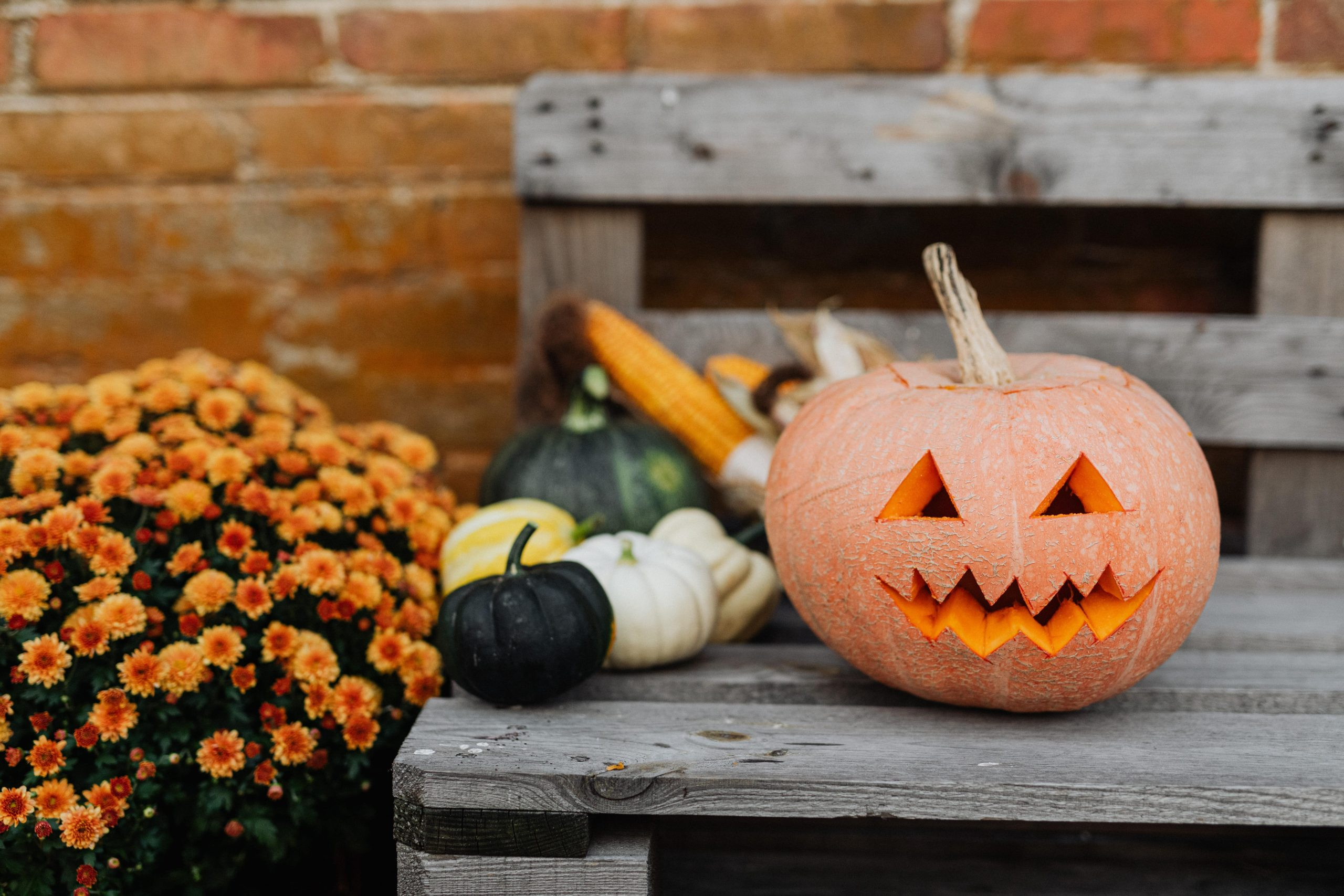 A carved pumpkin sits on a wooden bench