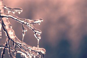 A frozen tree branch.