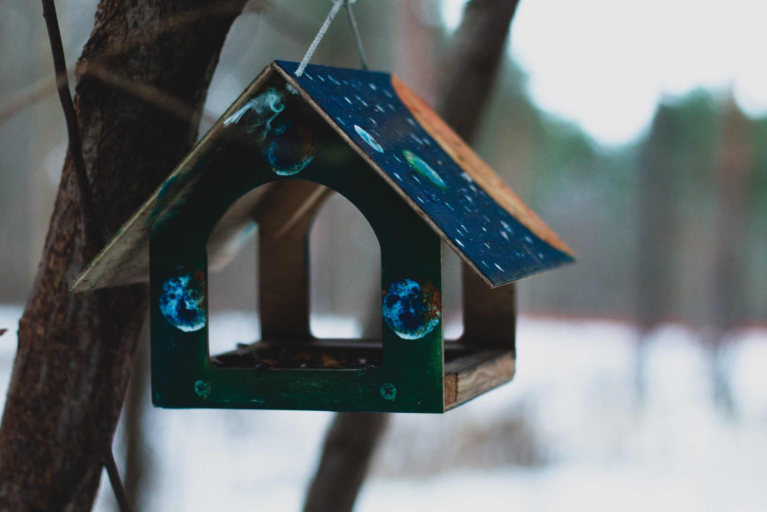 A bird feeder hangs from a tree.